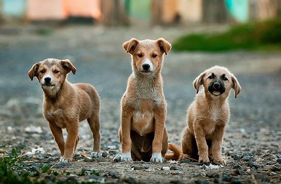 I italien dyr farlige Dyreliv i